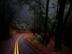 Fairfax_Bolinas_Road_by_JasonTheStranger