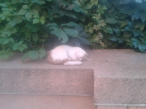 Siesta kitten in hot Bucharest