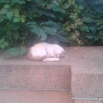 Siesta kitten in hot Bucharest