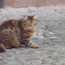 The electrostatic cat also in Tuscania, Italy