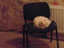 Prince – the castle Cat in Hunedoara sleeping in the gallery