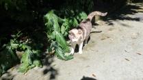 Napoli park cat